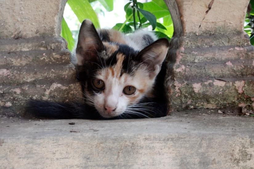 The shy wild pussycat